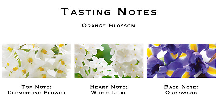 Jo Malone Limited Edition Orange Blossom Notes
